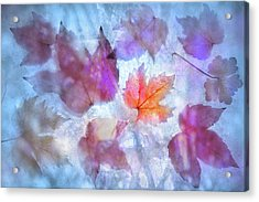 Acrylic Print featuring the photograph Freeze by Richard Piper