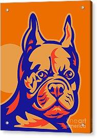 French Bulldog Head Portrait Retro Acrylic Print by Aloysius Patrimonio