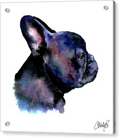 French Bulldog Portrait Acrylic Print