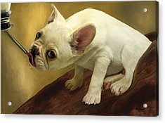 Acrylic Print featuring the digital art French Bulldog  by Thanh Thuy Nguyen