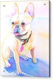 French Bulldog Watercolor Acrylic Print