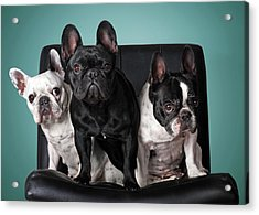 French Bulldogs Acrylic Print by Retales Botijero