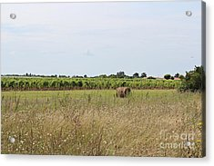Acrylic Print featuring the photograph French Countryside by Cendrine Marrouat