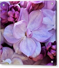 French Lilac Flower Acrylic Print by Rona Black