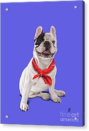 Acrylic Print featuring the digital art Frenchie Colour by Rob Snow