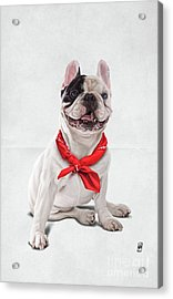 Acrylic Print featuring the digital art Frenchie Wordless by Rob Snow