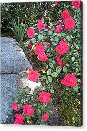 Fresco Roses Acrylic Print by Karen Fowler