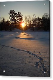 Fresh Deer Tracks At Sunrise Acrylic Print