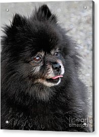 Acrylic Print featuring the photograph Fresh Dog by Debbie Stahre