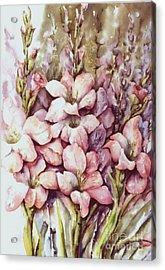Fresh Gladiolas Acrylic Print by Marta Styk