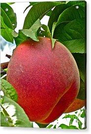 Fresh Peach Acrylic Print by Gwyn Newcombe