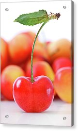 Fresh Ripe Cherries Isolated On White Acrylic Print by Sandra Cunningham