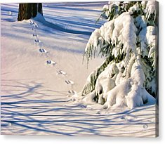 Fresh Snow Prints Acrylic Print by Christopher Arndt