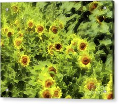 Fresh Sunflowers Acrylic Print