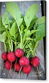 Acrylic Print featuring the photograph Freshly Picked Radishes by Elena Elisseeva