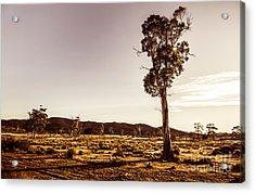 Freycinet Bushland Background Acrylic Print by Jorgo Photography - Wall Art Gallery