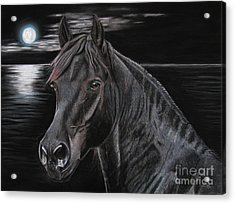 Friasian Gelding Acrylic Print by Sabine Lackner