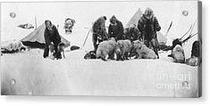 Fridtjof Nansen (1861-1930) Acrylic Print by Granger