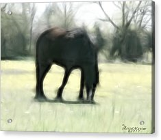 Acrylic Print featuring the photograph Friend Of Distinction  by EricaMaxine  Price