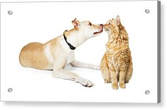 Friendly Dog And Cat Sniffing Each Other Acrylic Print by Susan Schmitz