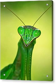 Friendly Mantis Acrylic Print