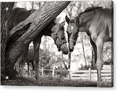 Friends - Black And White Acrylic Print by Angela Rath