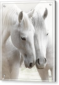 Acrylic Print featuring the photograph Friends D2573 by Wes and Dotty Weber