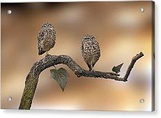 Friends Acrylic Print by Gouzel -