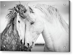 Friends V Acrylic Print
