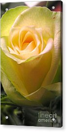 Friendship Rose Acrylic Print