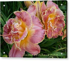 Frills Acrylic Print by Sandy Collier