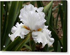 Frilly White Iris Flower Acrylic Print