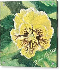 Frilly Yellow Pansy Acrylic Print