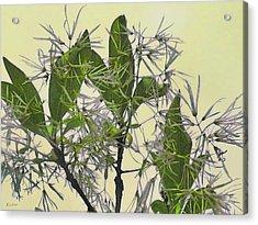Fringe Tree Acrylic Print