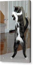 Frisbee Cat Acrylic Print