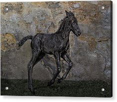 Frisian-boy Acrylic Print