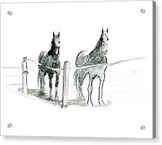 Friesian Horses Acrylic Print
