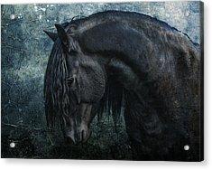 Frisian Stallion Acrylic Print