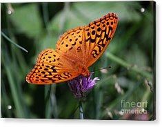 Fritillary Wings Acrylic Print