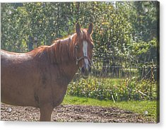 1010 - Froede Roads' Chestnut Brown Acrylic Print