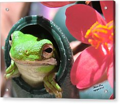 Frog At Selby Acrylic Print by Michele Penn