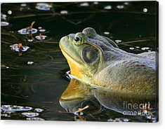 Frog At Sunset Acrylic Print by Paula Guttilla