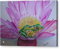 Frog Acrylic Print by Donielle Boal