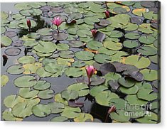 Frog Gardens Acrylic Print by Amy Holmes