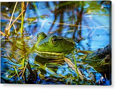 Frog In My Pond Acrylic Print