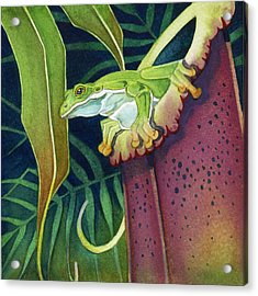 Frog In Tropical Pitcher Acrylic Print
