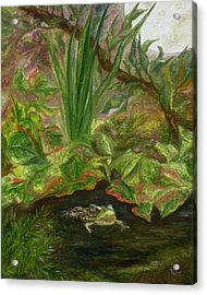 Frog Medicine Acrylic Print