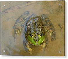 Acrylic Print featuring the photograph Frog Of Lake Redman by Donald C Morgan