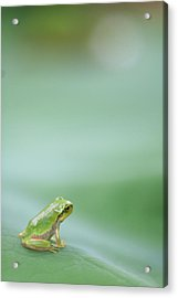 Frog On Leaf Of Lotus Acrylic Print by Naomi Okunaka