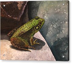 Frog Acrylic Print by Sharon Farber